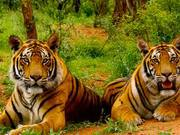 Experience our best tour packages for Jim Corbett National Park