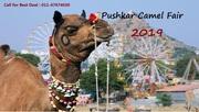Rajasthan Tour Packages | Pushkar Camel Fair Festival 2019