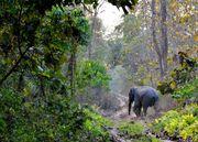 Adventure of Jungle Safari Trip at Lataguri