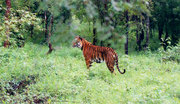 Attraction of Beautiful Forest Trip at Buxa Tiger Reserve