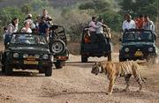 The Grand Golden Ranthambore With Couple package.