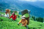 Gangtok to Darjeeling : Monasteries and Peaks Tour package limited
